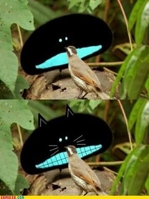 Bird-of-paradise (or) Something Else?