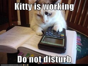 Kitty is working  Do not disturb