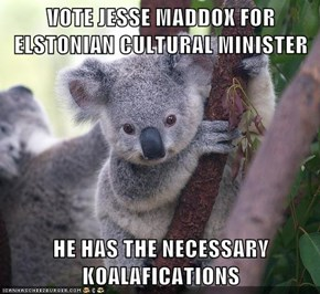 VOTE JESSE MADDOX FOR ELSTONIAN CULTURAL MINISTER  HE HAS THE NECESSARY KOALAFICATIONS