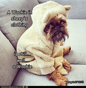A Wookie in sheep's clothing