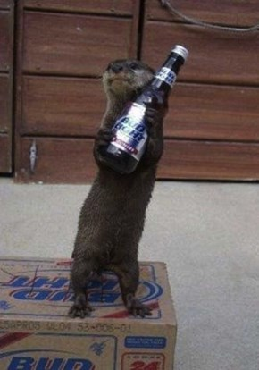 Otter Loves His Beer