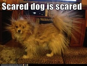 Scared dog is scared