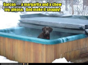 Garcon . . . a margarita and a chew toy, please.   And make it snappy!