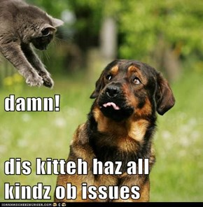 damn!  dis kitteh haz all kindz ob issues