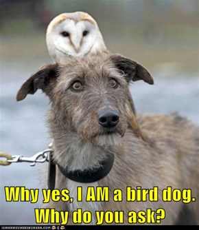 Why yes, I AM a bird dog. Why do you ask?