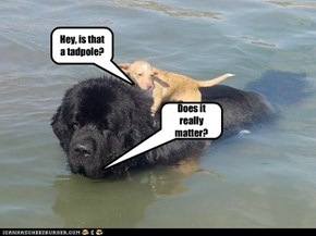 If you need a newfie dog to help you get home, tadpoles don't meanmuch