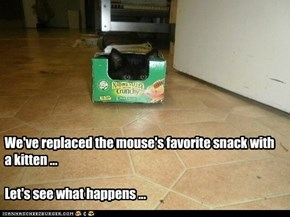We've replaced the mouse's favorite snack with a kitten ...  Let's see what happens ...