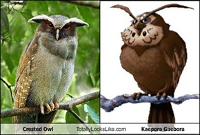 Crested Owl Totally Looks Like Kaepora Gaebora