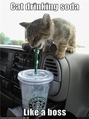 Cat drinking soda  Like a boss