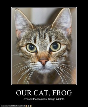 OUR CAT, FROG