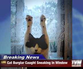 Breaking News - Cat Burglar Caught Sneaking in Window
