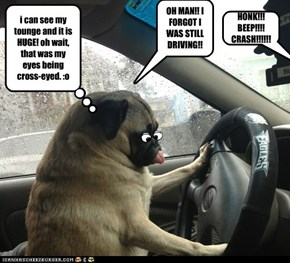 PUGS TOUNGE DISTRACTING TO DRIVER