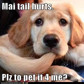 Mai tail hurts.  Plz to pet it 4 me?