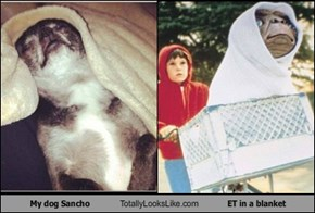 My dog Sancho Totally Looks Like ET in a blanket