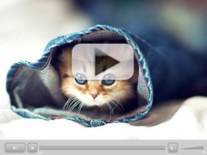 Around the Interwebz: Meet Daisy, the Internet's Cutest Kitten!