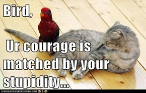 Bird,    Ur courage is matched by your stupidity...