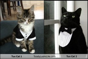 Tux Cat 1 Totally Looks Like Tux Cat 2