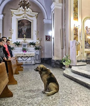 Italian dog attends mass