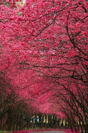 A Blooming Trail