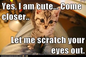 Yes, I am cute... Come closer..  Let me scratch your eyes out.