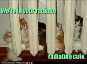 We're in your radiator radiating cute.