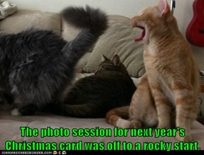 The photo session for next year's Christmas card was off to a rocky start.