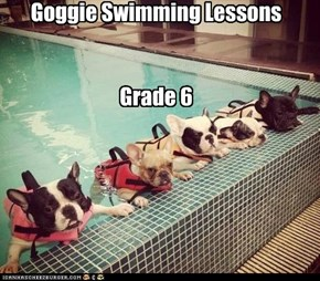 Goggie Swimming Lessons   Grade 6