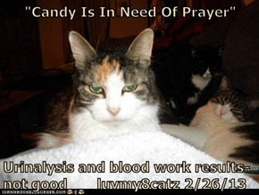 """Candy Is In Need Of Prayer""  Urinalysis and blood work results-not good       luvmy8catz 2/26/13"