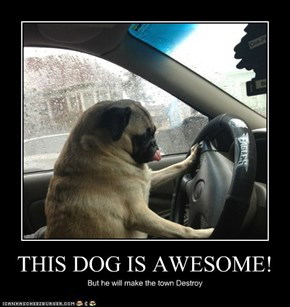 THIS DOG IS AWESOME!