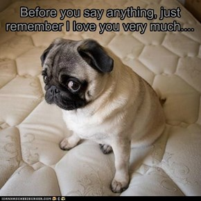 Before you say anything, just remember I love you very much....