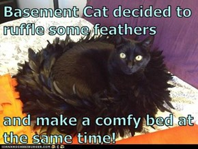 Basement Cat decided to ruffle some feathers  and make a comfy bed at the same time!