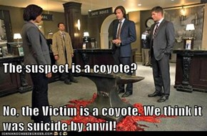 The suspect is a coyote? No, the Victim is a coyote. We think it was suicide by anvil!