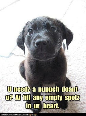 U  needz  a  puppeh  doant u?  Ai  fill  any  empty  spotz in  ur   heart.