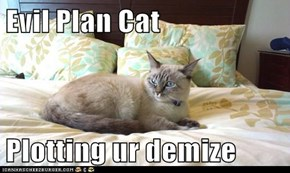Evil Plan Cat  Plotting ur demize