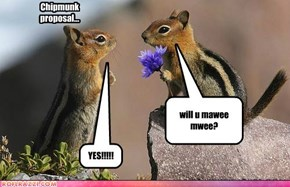 love our chipmunks