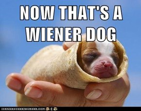 NOW THAT'S A WIENER DOG