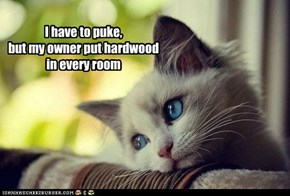 I have to puke, but my owner put hardwood in every room