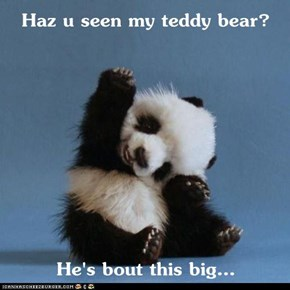 Haz u seen my teddy bear?  He's bout this big...