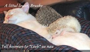 A littul lower, Brushy... LoL Tell hooman to *Leeb* us nau