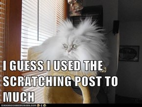 I GUESS I USED THE SCRATCHING POST TO MUCH