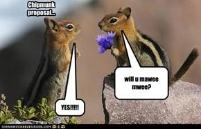 LOVE YOUR CHIPMUNKS