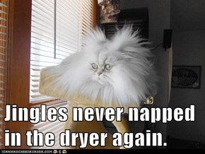 Jingles never napped in the dryer again.