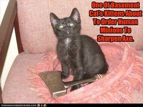 One Of Basement Cat's Kittens About To Order Human Minions To Sharpen Axe.