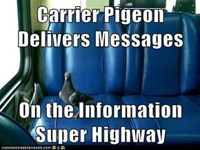 Carrier Pigeon Delivers Messages  On the Information Super Highway