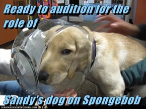 Ready to audition for the role of   Sandy's dog on Spongebob