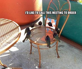 Turns out Everybody Has To Deal With Boring Weekday Meetings -- Bet Yours Aren't This Cute, Though