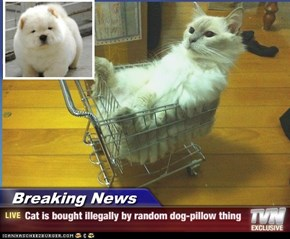 Breaking News - Cat is bought illegally by random dog-pillow thing