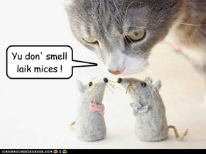 Yu don' smell laik mices !