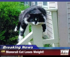 Breaking News - Monorail Cat Loses Weight!