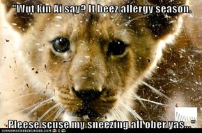 """Wut kin Ai say? It beez allergy season.   Pleese scuse my sneezing all ober yas..."""